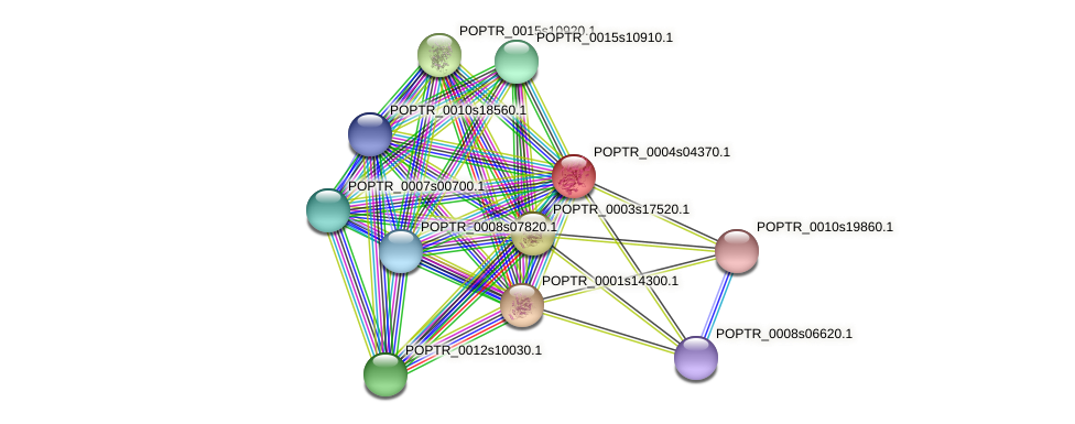 POPTR_0004s04370.1 protein (Populus trichocarpa) - STRING interaction network