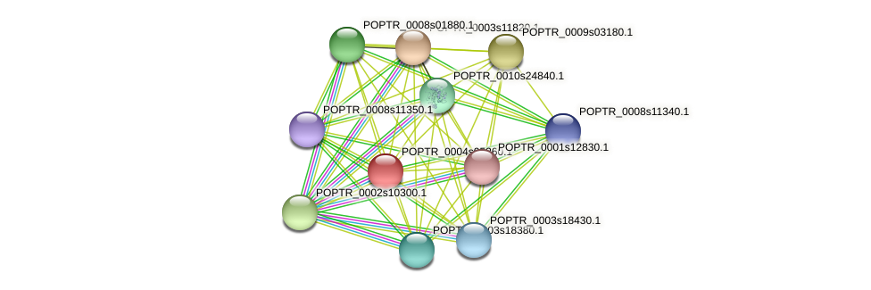 POPTR_0004s05260.1 protein (Populus trichocarpa) - STRING interaction network