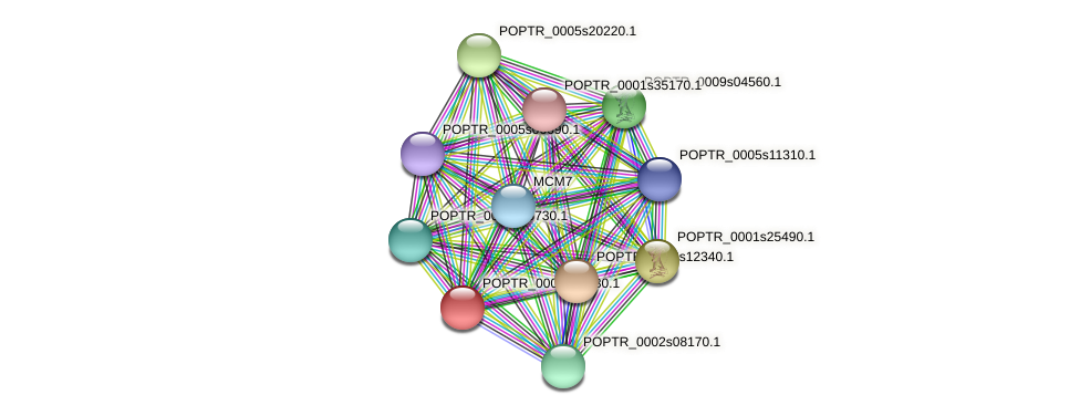 POPTR_0004s06030.1 protein (Populus trichocarpa) - STRING interaction network
