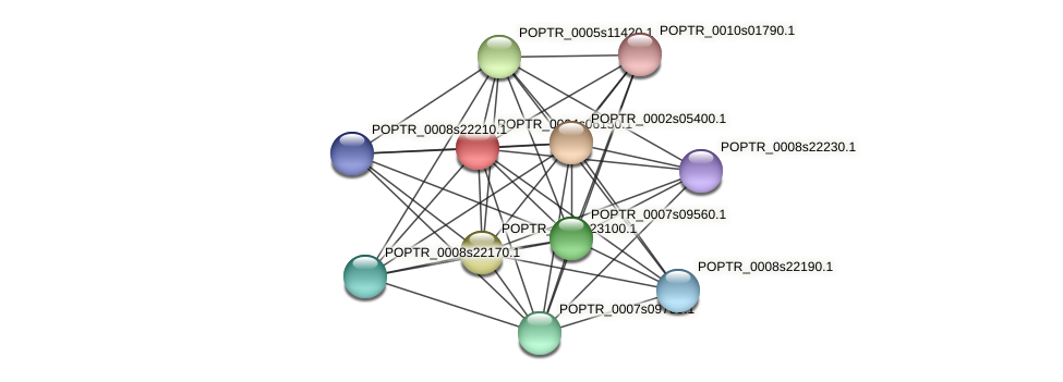 POPTR_0004s06150.1 protein (Populus trichocarpa) - STRING interaction network