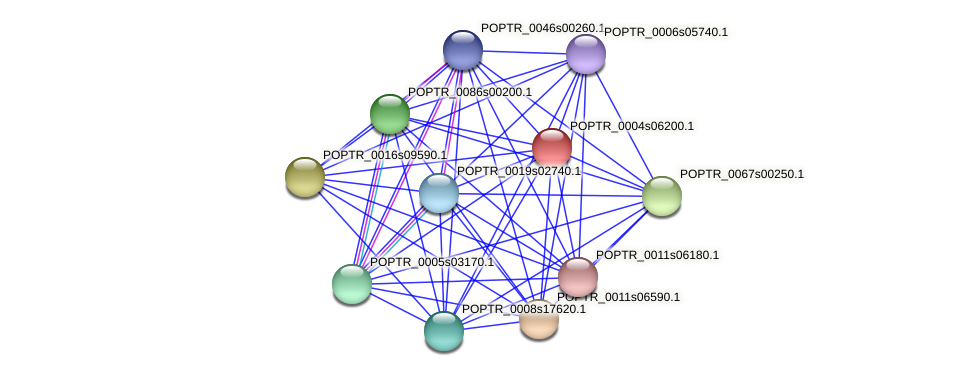 POPTR_0004s06200.1 protein (Populus trichocarpa) - STRING interaction network