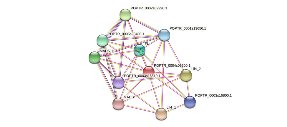 PTAG1 protein (Populus trichocarpa) - STRING interaction network