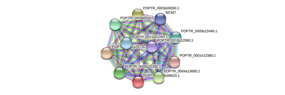 POPTR_0004s06620.1 protein (Populus trichocarpa) - STRING interaction network