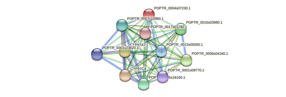POPTR_0004s07230.1 protein (Populus trichocarpa) - STRING interaction network