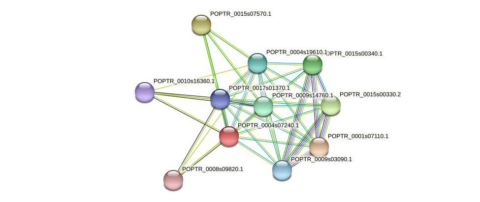 POPTR_0004s07240.1 protein (Populus trichocarpa) - STRING interaction network