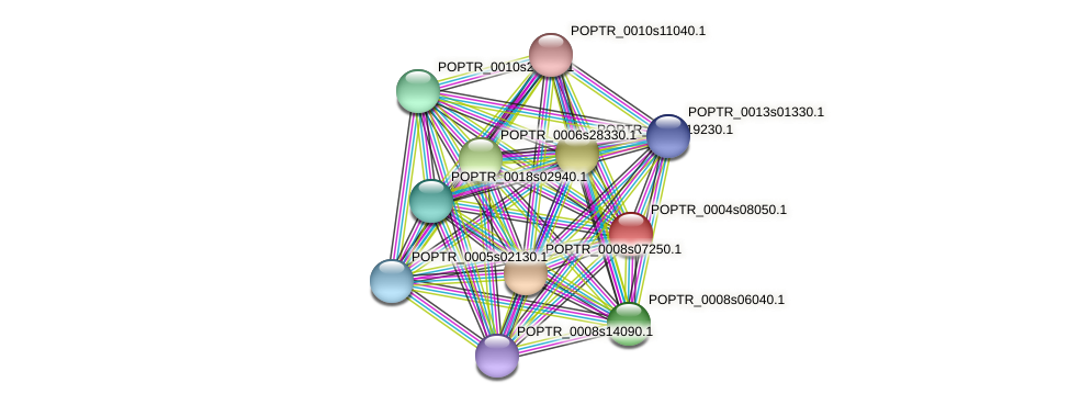 POPTR_0004s08050.1 protein (Populus trichocarpa) - STRING interaction network