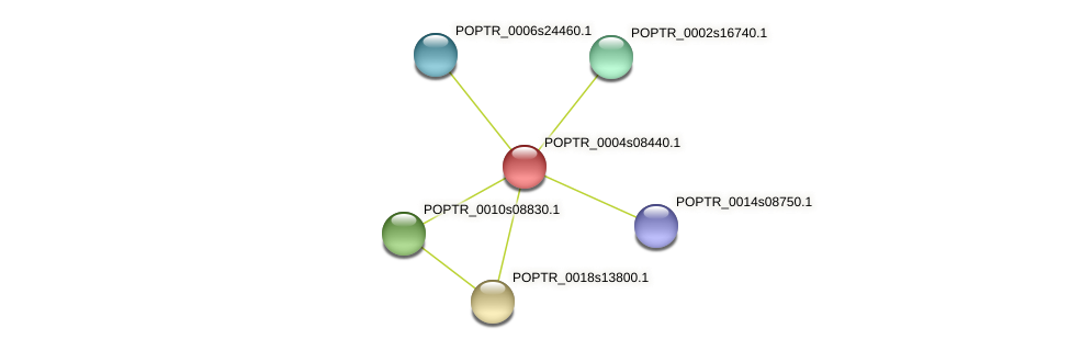 POPTR_0004s08440.1 protein (Populus trichocarpa) - STRING interaction network