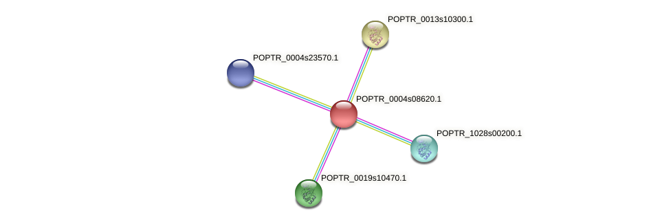 POPTR_0004s08620.1 protein (Populus trichocarpa) - STRING interaction network