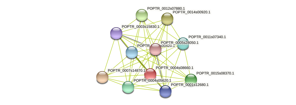 POPTR_0004s08660.1 protein (Populus trichocarpa) - STRING interaction network