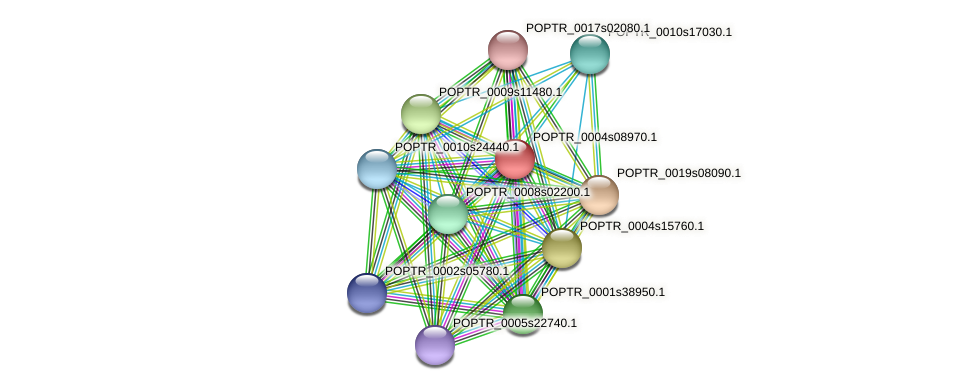 POPTR_0004s08970.1 protein (Populus trichocarpa) - STRING interaction network