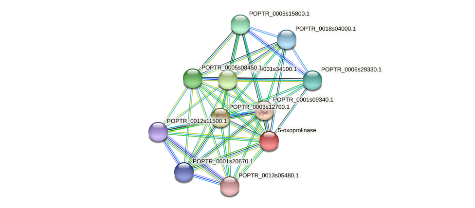 POPTR_0004s09010.1 protein (Populus trichocarpa) - STRING interaction network