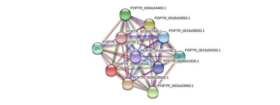 POPTR_0004s09160.1 protein (Populus trichocarpa) - STRING interaction network