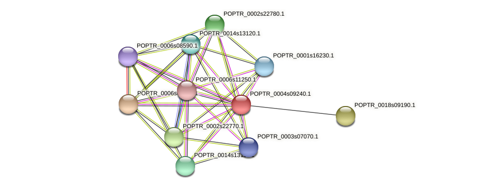 POPTR_0004s09240.1 protein (Populus trichocarpa) - STRING interaction network