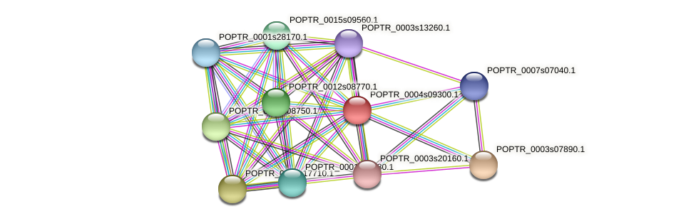 POPTR_0004s09300.1 protein (Populus trichocarpa) - STRING interaction network