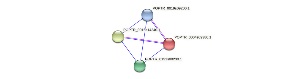 POPTR_0004s09380.1 protein (Populus trichocarpa) - STRING interaction network