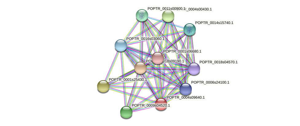 POPTR_0004s09640.1 protein (Populus trichocarpa) - STRING interaction network