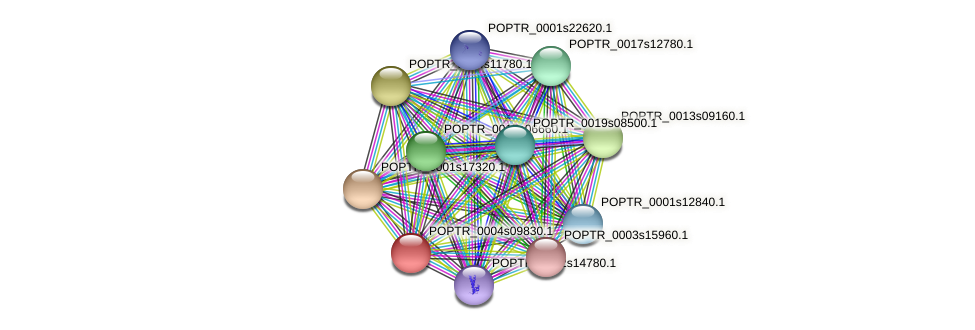 POPTR_0004s09830.1 protein (Populus trichocarpa) - STRING interaction network