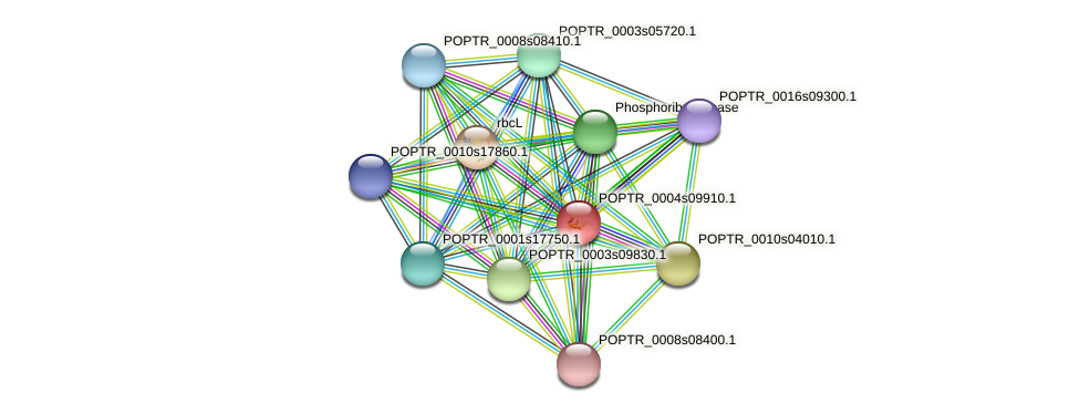 POPTR_0004s09910.1 protein (Populus trichocarpa) - STRING interaction network