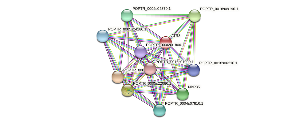 POPTR_0004s10030.1 protein (Populus trichocarpa) - STRING interaction network