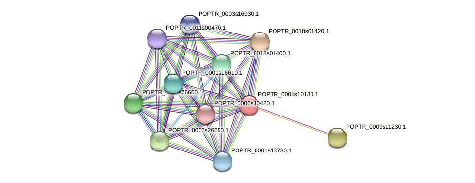 POPTR_0004s10130.1 protein (Populus trichocarpa) - STRING interaction network