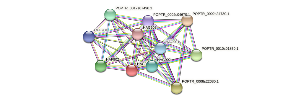 POPTR_0004s10390.1 protein (Populus trichocarpa) - STRING interaction network