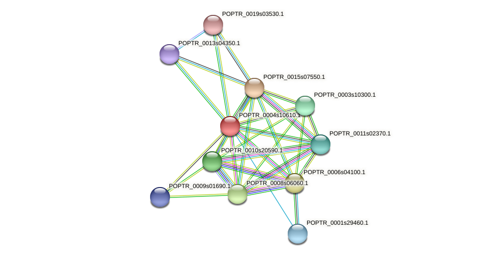 POPTR_0004s10610.1 protein (Populus trichocarpa) - STRING interaction network