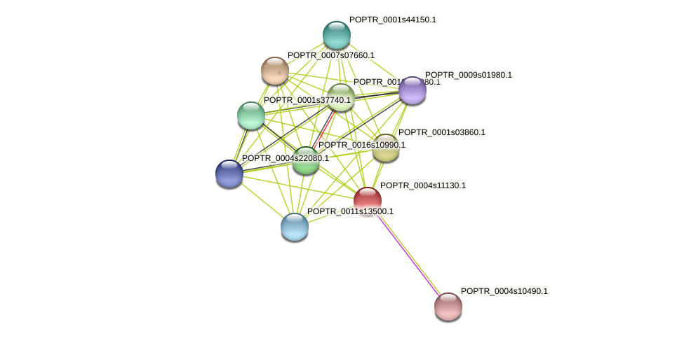 POPTR_0004s11130.1 protein (Populus trichocarpa) - STRING interaction network