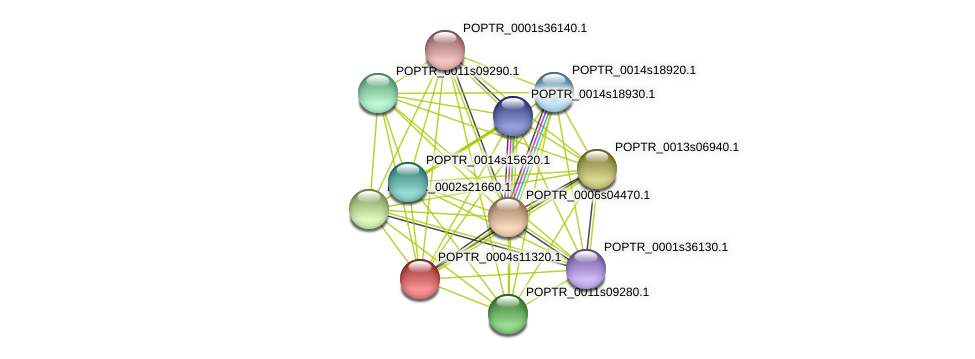 POPTR_0004s11320.1 protein (Populus trichocarpa) - STRING interaction network