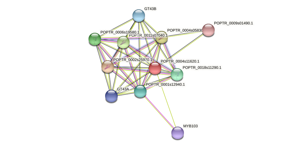 POPTR_0004s11620.1 protein (Populus trichocarpa) - STRING interaction network