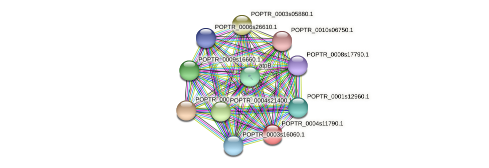 POPTR_0004s11790.1 protein (Populus trichocarpa) - STRING interaction network