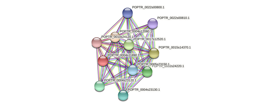 POPTR_0004s11890.1 protein (Populus trichocarpa) - STRING interaction network