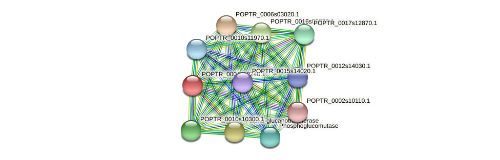 POPTR_0004s12240.1 protein (Populus trichocarpa) - STRING interaction network