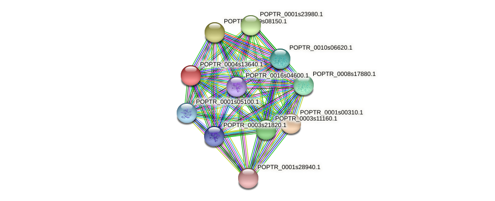 POPTR_0004s13640.1 protein (Populus trichocarpa) - STRING interaction network