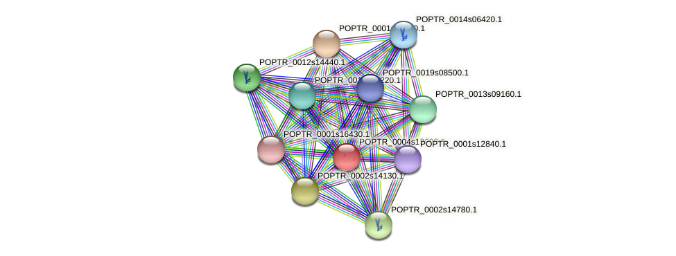 POPTR_0004s13690.1 protein (Populus trichocarpa) - STRING interaction network