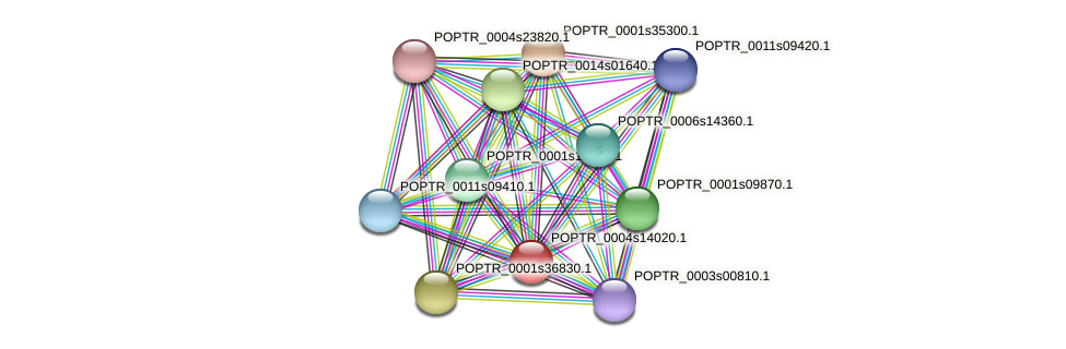 POPTR_0004s14020.1 protein (Populus trichocarpa) - STRING interaction network