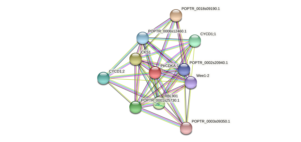 POPTR_0004s14080.1 protein (Populus trichocarpa) - STRING interaction network