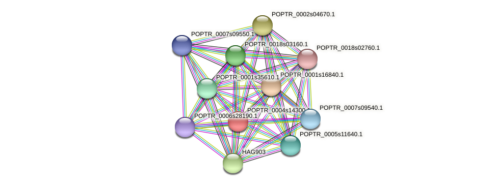 POPTR_0004s14300.1 protein (Populus trichocarpa) - STRING interaction network
