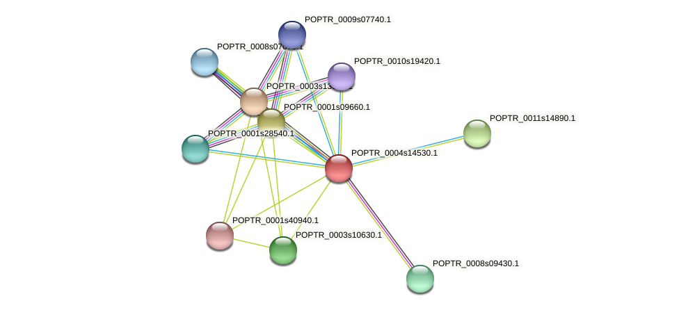 POPTR_0004s14530.1 protein (Populus trichocarpa) - STRING interaction network
