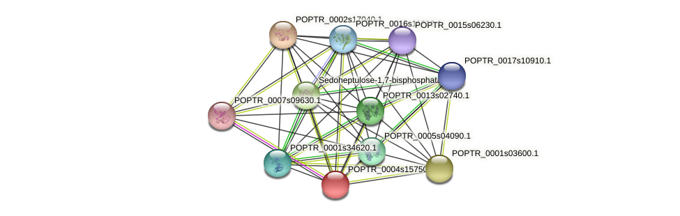 POPTR_0004s15750.1 protein (Populus trichocarpa) - STRING interaction network