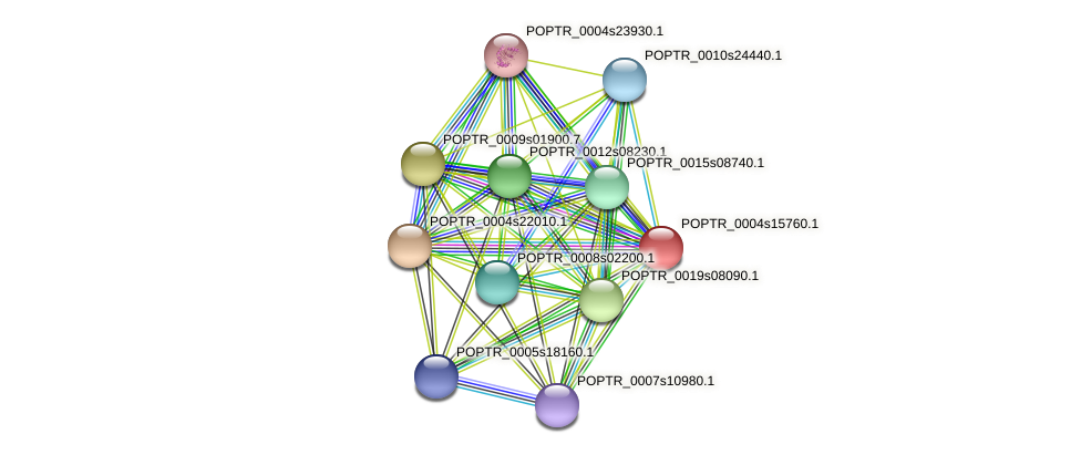 POPTR_0004s15760.1 protein (Populus trichocarpa) - STRING interaction network
