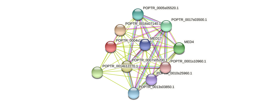 POPTR_0004s16010.1 protein (Populus trichocarpa) - STRING interaction network