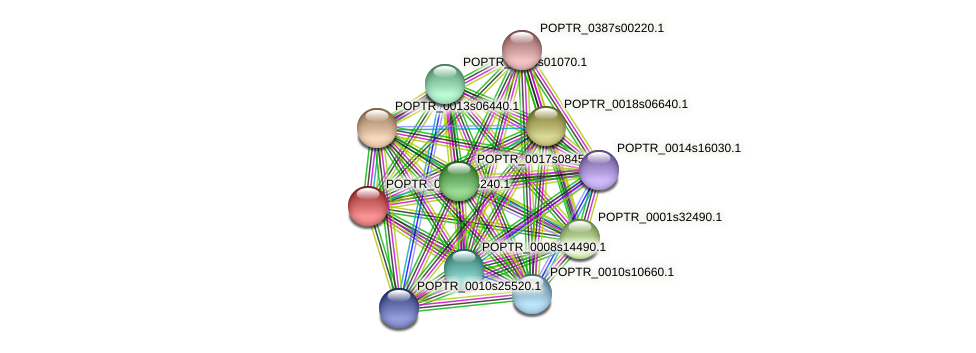 POPTR_0004s16240.1 protein (Populus trichocarpa) - STRING interaction network