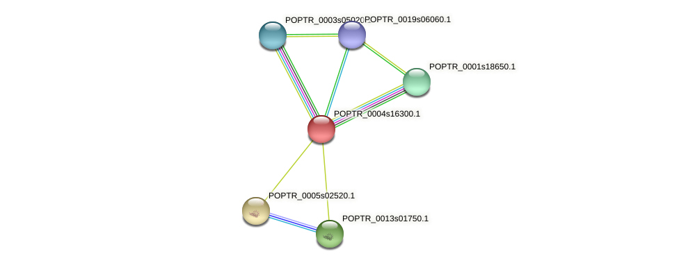 POPTR_0004s16300.1 protein (Populus trichocarpa) - STRING interaction network