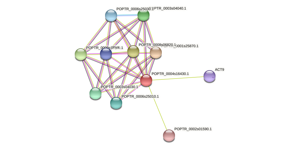 POPTR_0004s16430.1 protein (Populus trichocarpa) - STRING interaction network