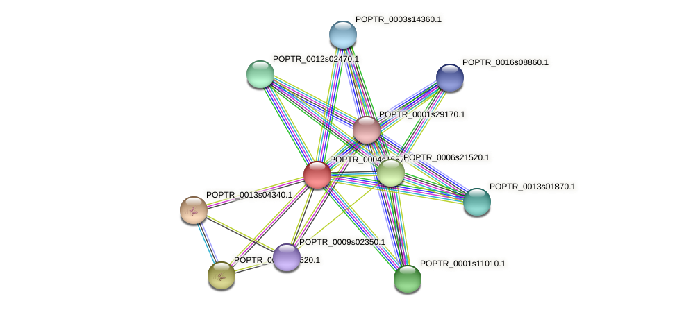 POPTR_0004s16570.1 protein (Populus trichocarpa) - STRING interaction network