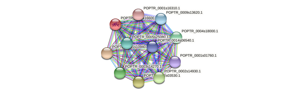 POPTR_0004s16600.1 protein (Populus trichocarpa) - STRING interaction network