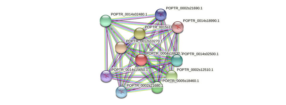 POPTR_0004s16630.1 protein (Populus trichocarpa) - STRING interaction network
