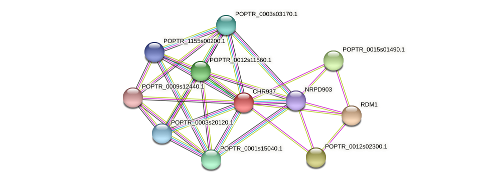 POPTR_0004s16640.1 protein (Populus trichocarpa) - STRING interaction network