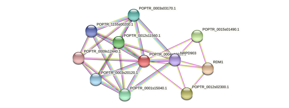 POPTR_0004s16650.1 protein (Populus trichocarpa) - STRING interaction network
