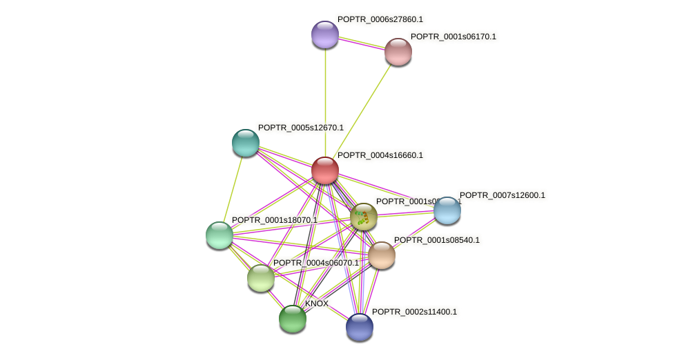POPTR_0004s16660.1 protein (Populus trichocarpa) - STRING interaction network